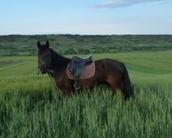 Vacanta cu cai in Romania