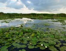 Castiga 5 zile de vacanta in Delta Dunarii