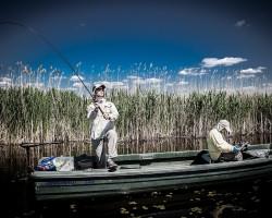 Calatorie dupa comorile deltei