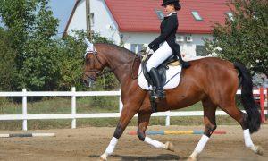 Vino in weekend sa vezi un spectacol cu cai!