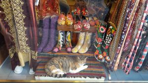 pisici din Istanbul