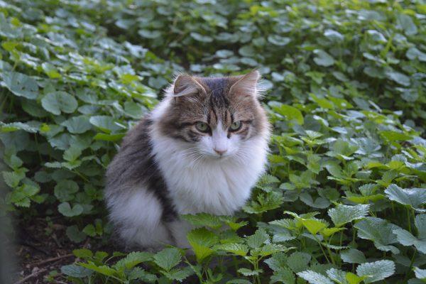 pisici-in-atena-1