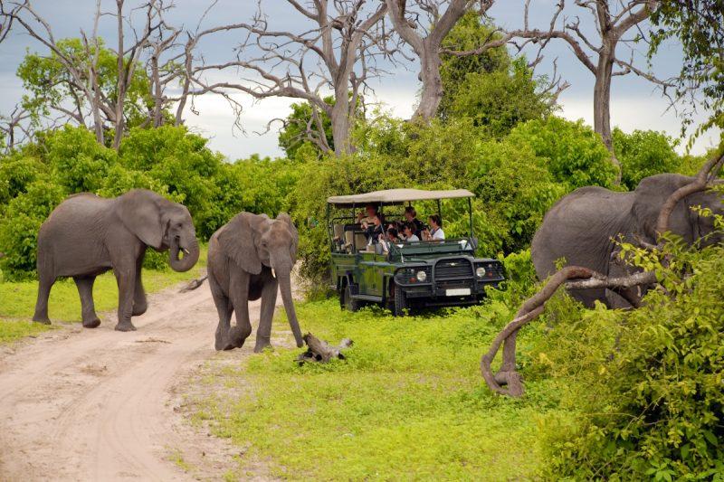 africa de sud safari