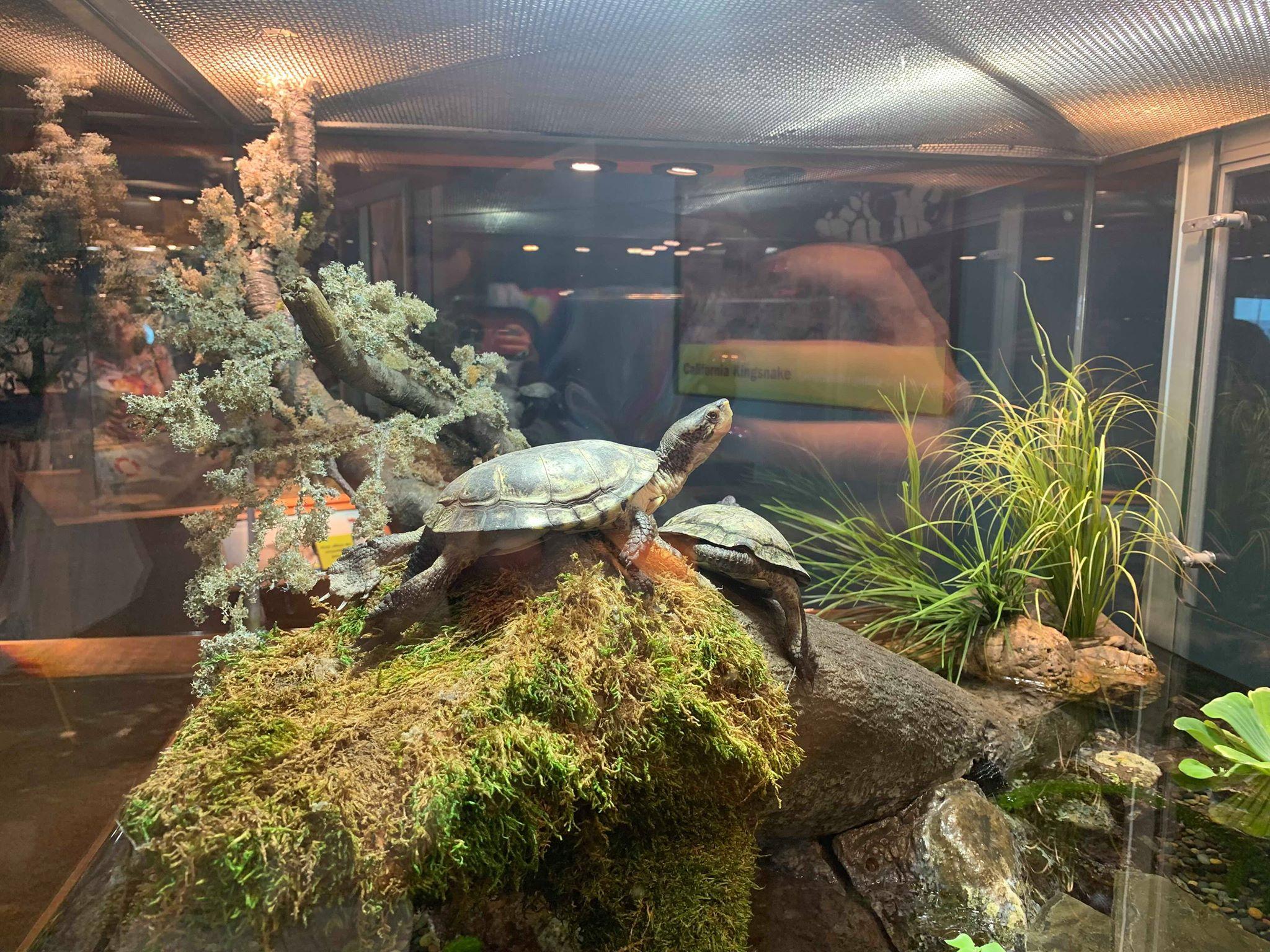 aquarium-san-francisco