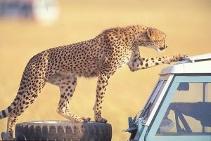kenya-safari-evisa